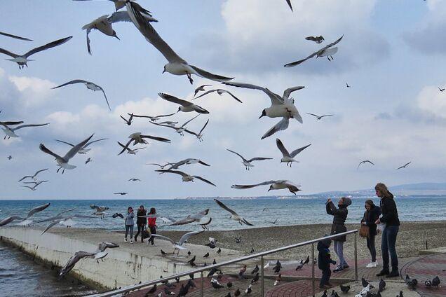 В Україні почався масовий мор птахів