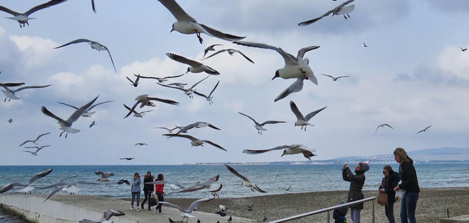 В Україні почався масовий мор птахів: знайдено сотні мертвих чайок