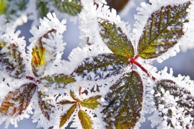 Приморозить: синоптики уточнили холодний прогноз по Україні