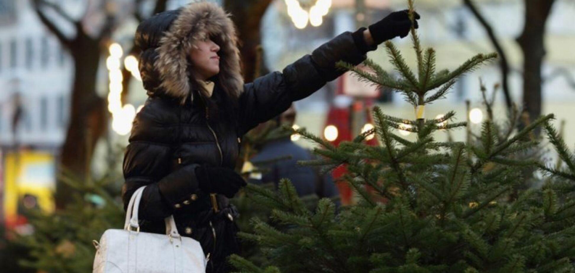 Деревья с радиацией и огромной наценкой: как не прогадать с новогодней елкой