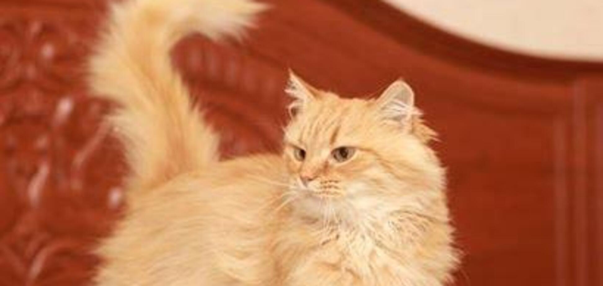 Друг безкоштовно: 4 котика Дніпра, які шукають дім