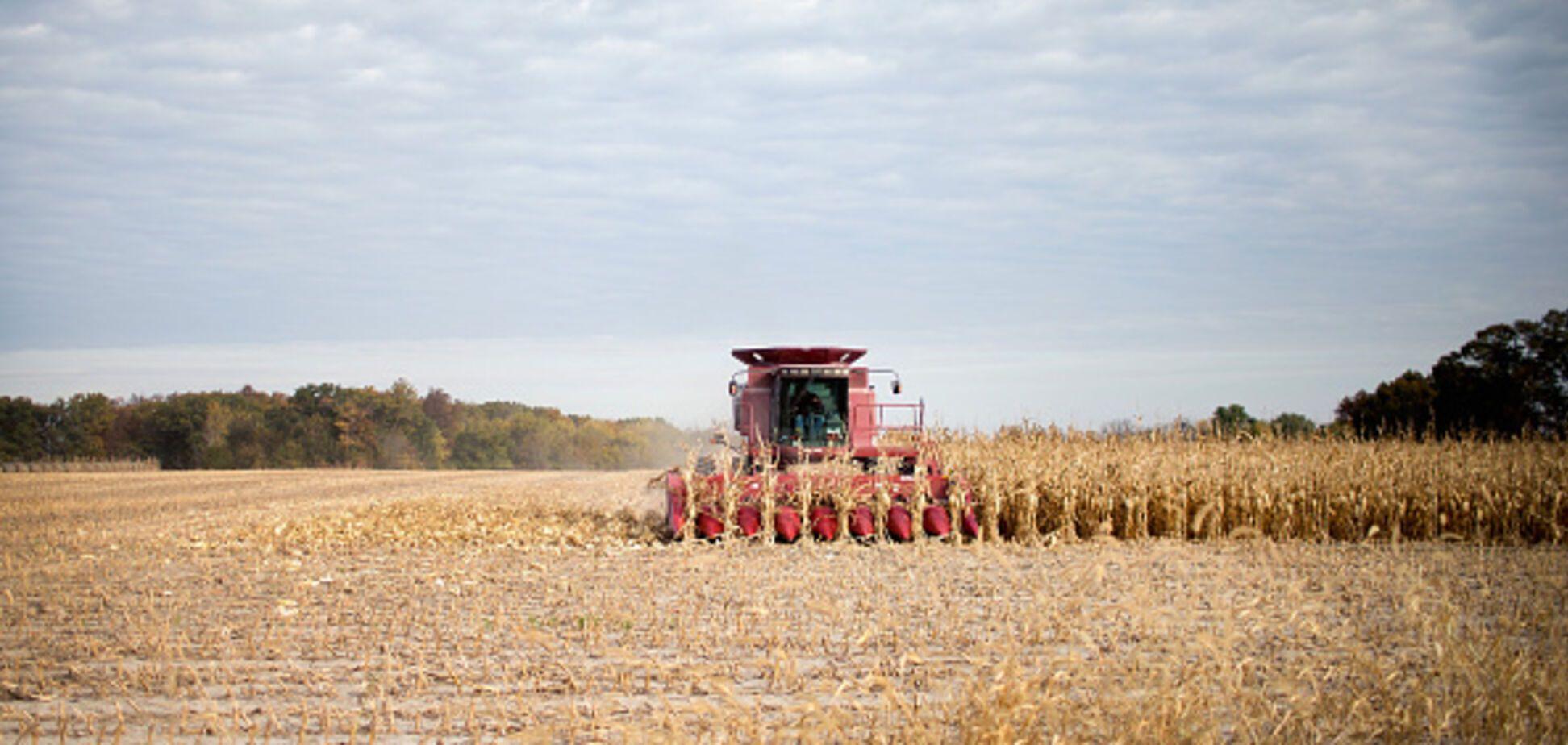 Земля пшеница