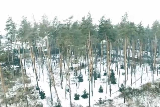 Лес, который хотят застроить