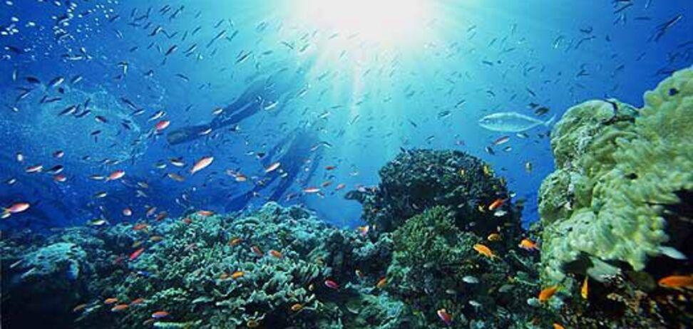 Найдено объяснение страшных звуков со дна Красного моря
