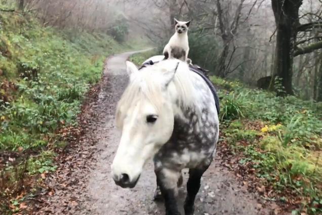 Справжній вершник: кіт обожнює верхову їзду