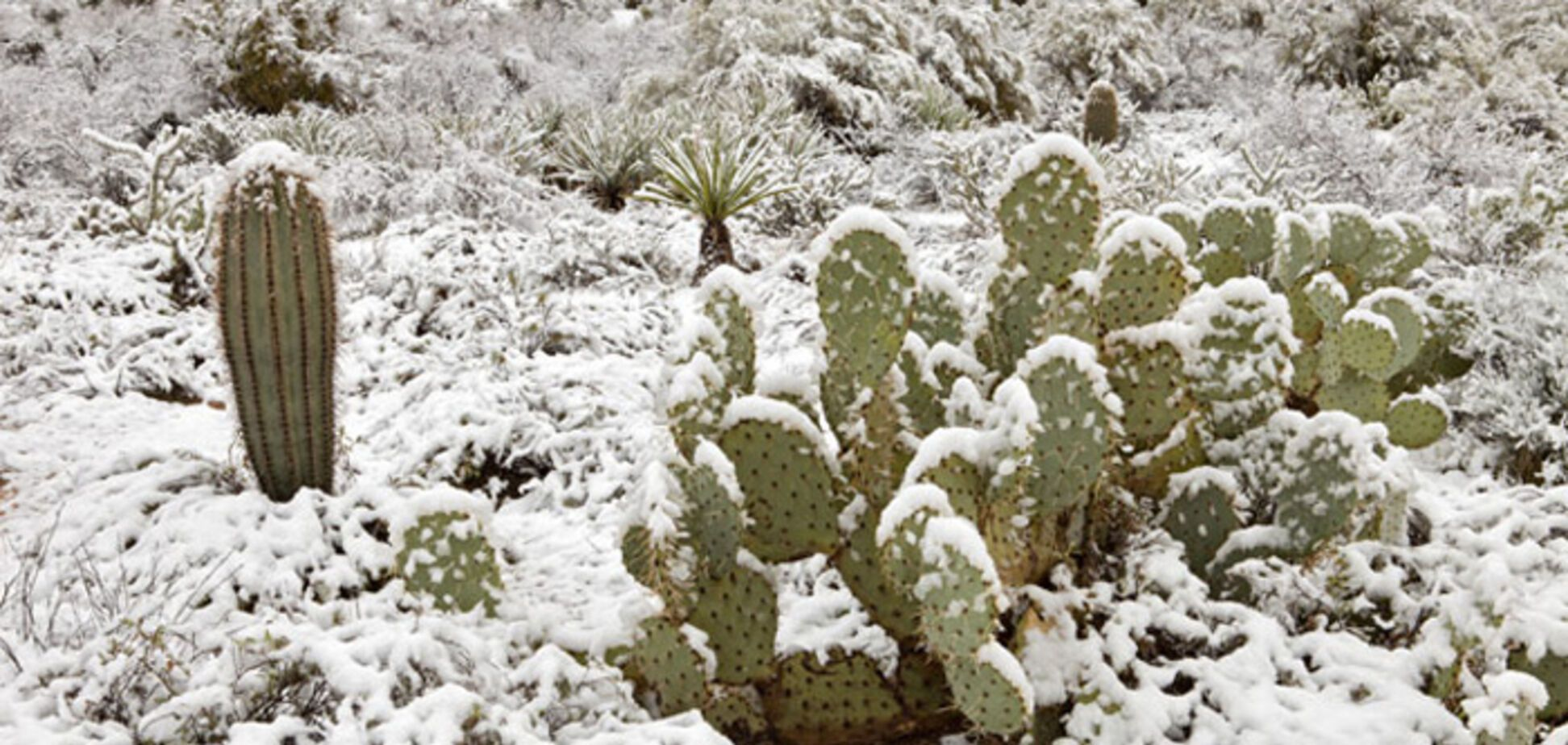 Марокко потерпає від снігопадів