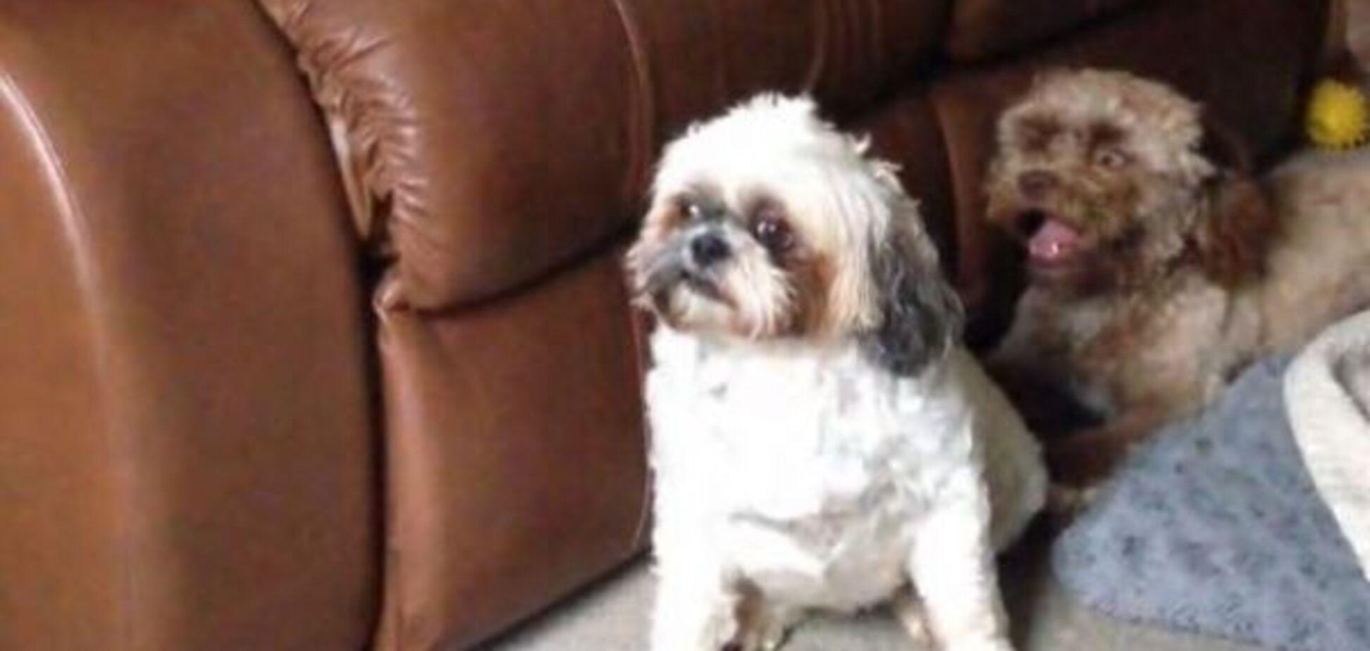Це не фотошоп: пес з незвичайною зовнішністю налякав мережу