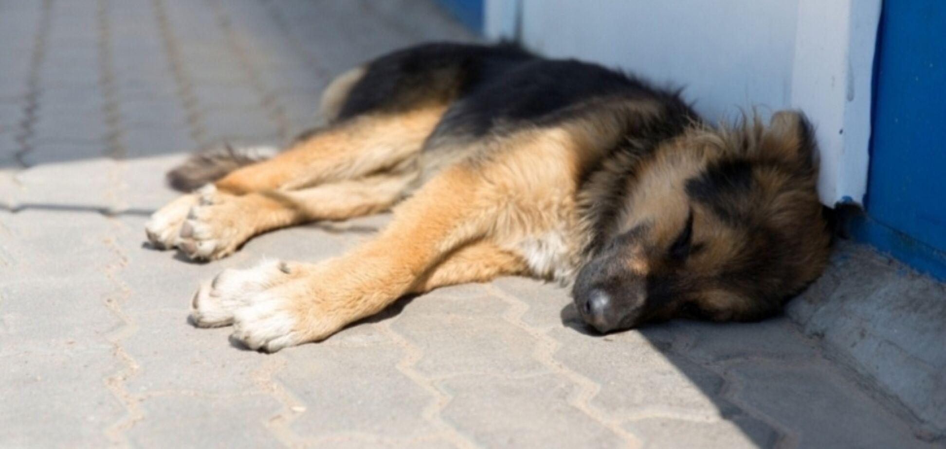Забив собаку лопатою: скандал зі шкуродером на Київщині отримав продовження