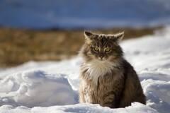 Три дні під снігом: Гідрометцентр попередив про 'сюрприз'