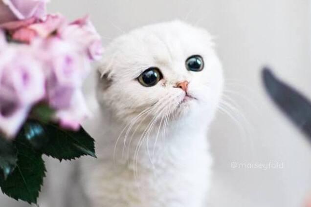 Кошки тоже плачут: трогательная истории в одном фото