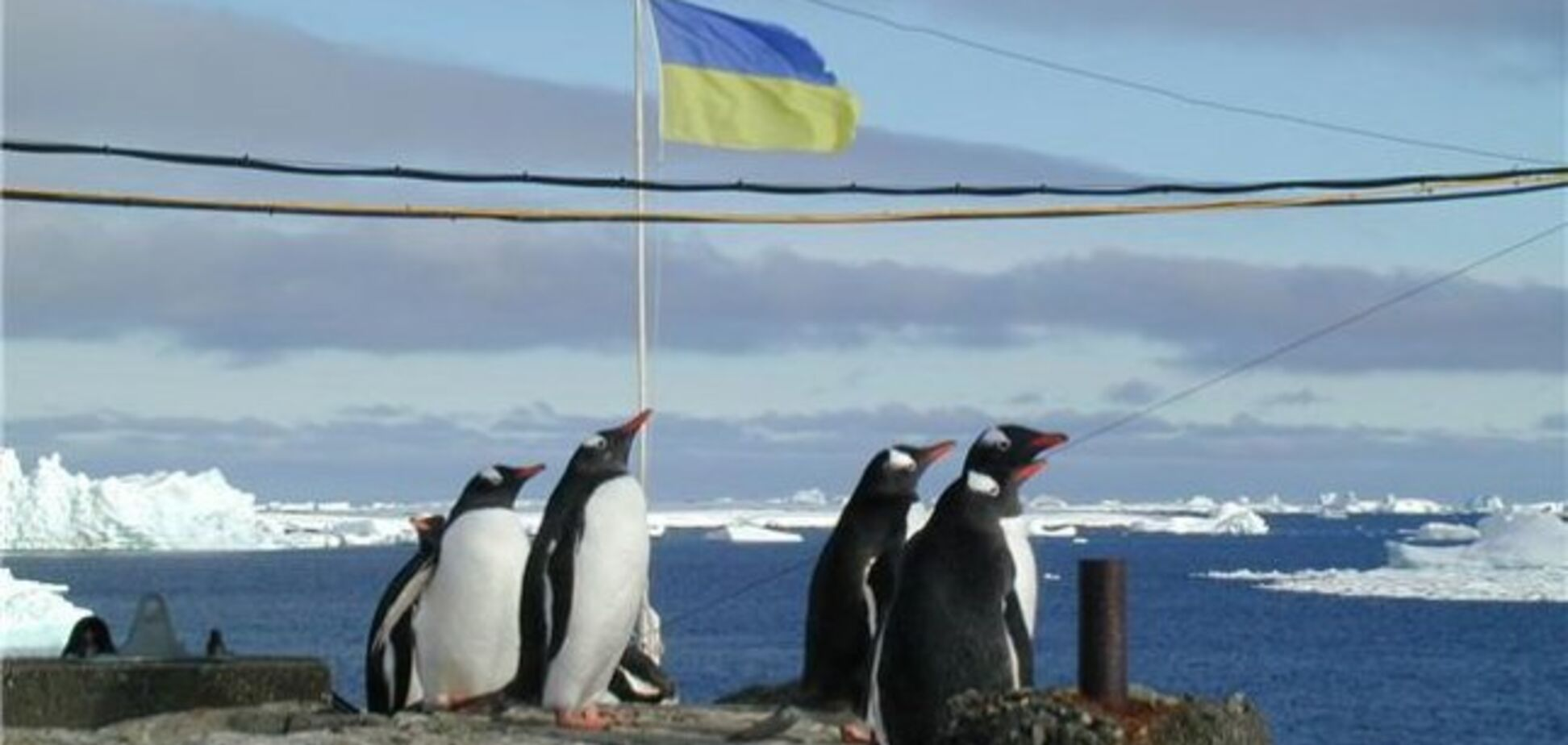 На станцію України в Антарктиді напали пінгвіни