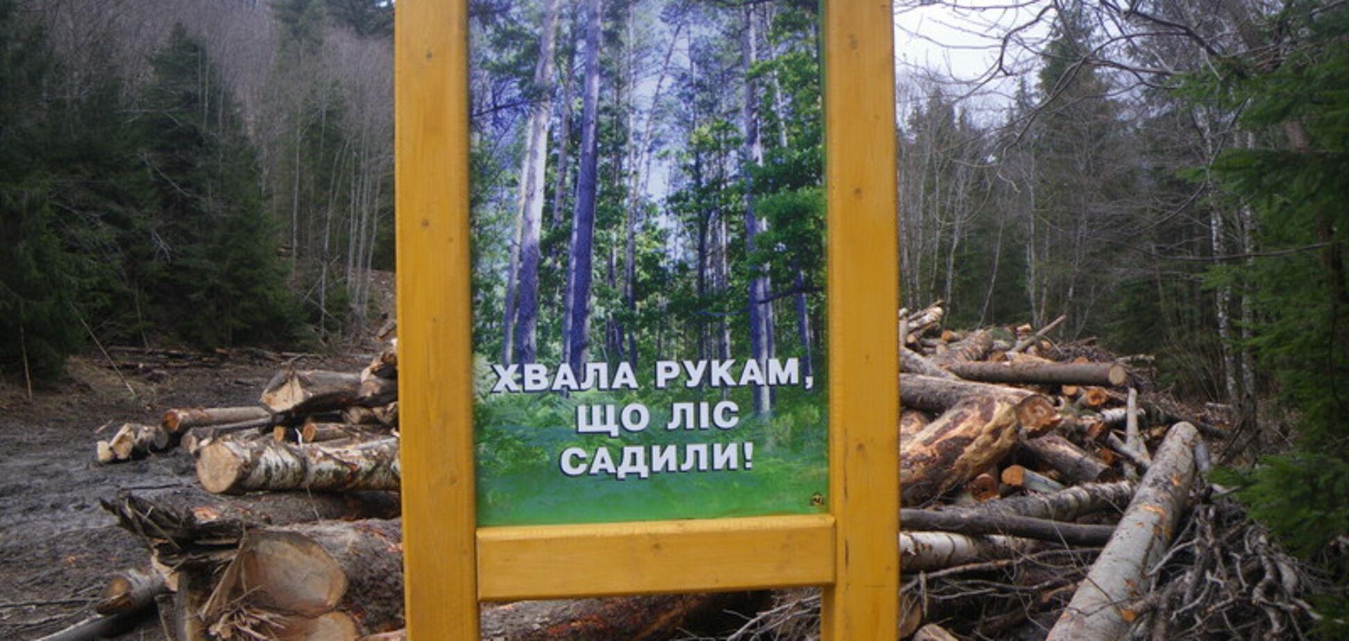 Вырубка леса в Карпатах: Украине предрекли экокатастрофу