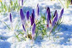 Погода в квітні: що про 'сніжний прогноз' думає Кульбіда
