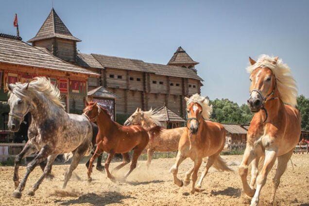 """Шоу-выставка """"Мир лошадей"""""""