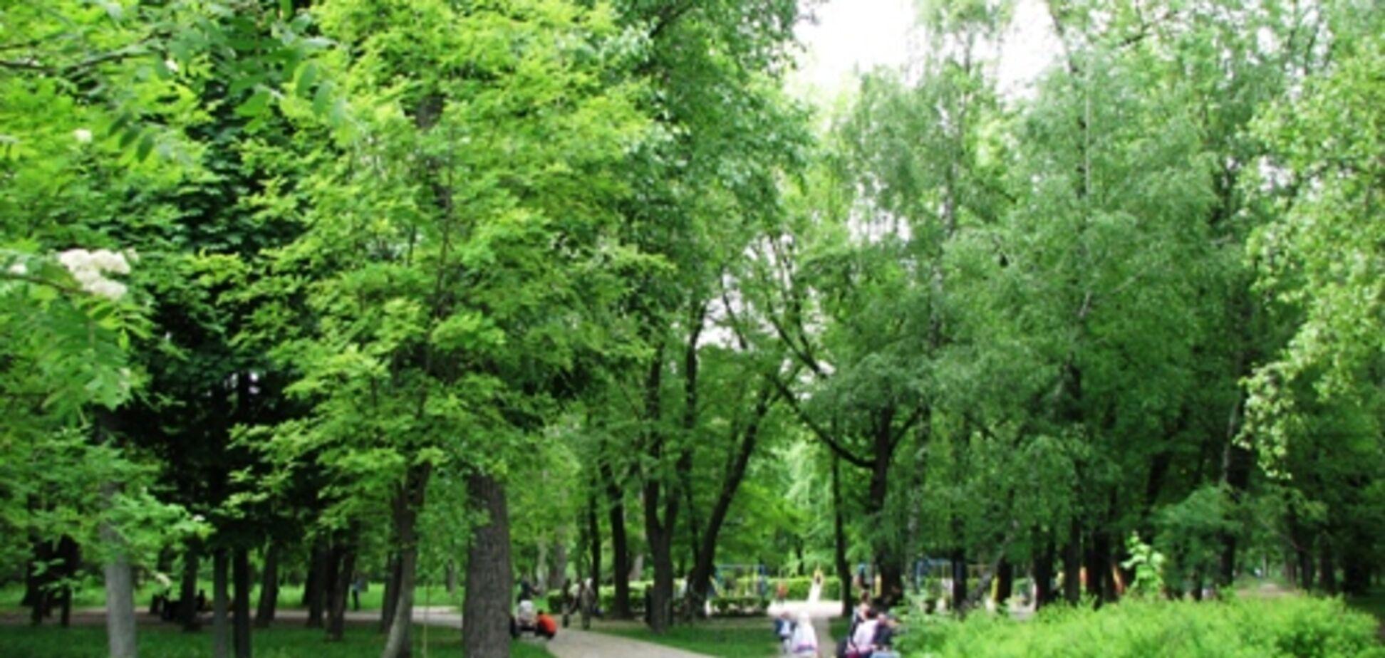 Геопластика и подсветка: как изменится Сырецкий парк