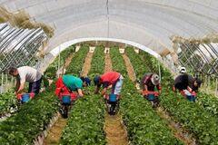 Більше, ніж МВФ: названо внесок заробітчан в економіку України
