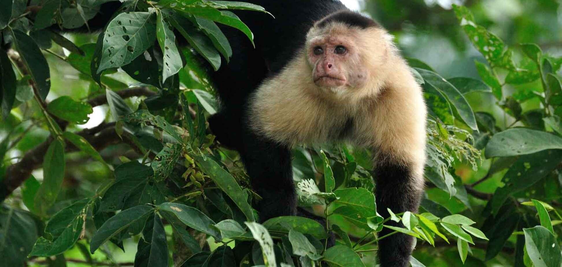 У Мехіко мавпочка підняла на ноги все місто