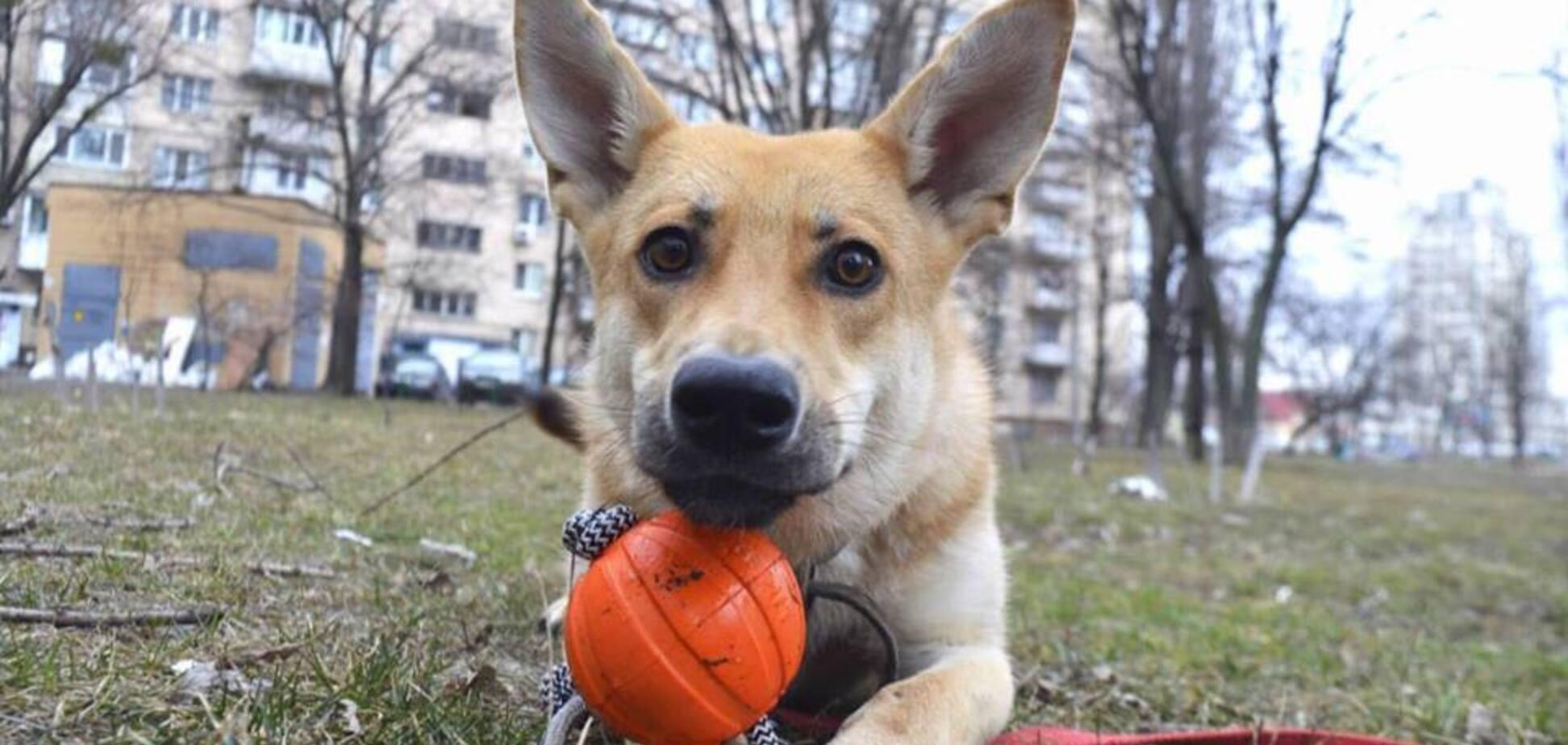 Друг тижня: 7 собак Києва, які шукають дім