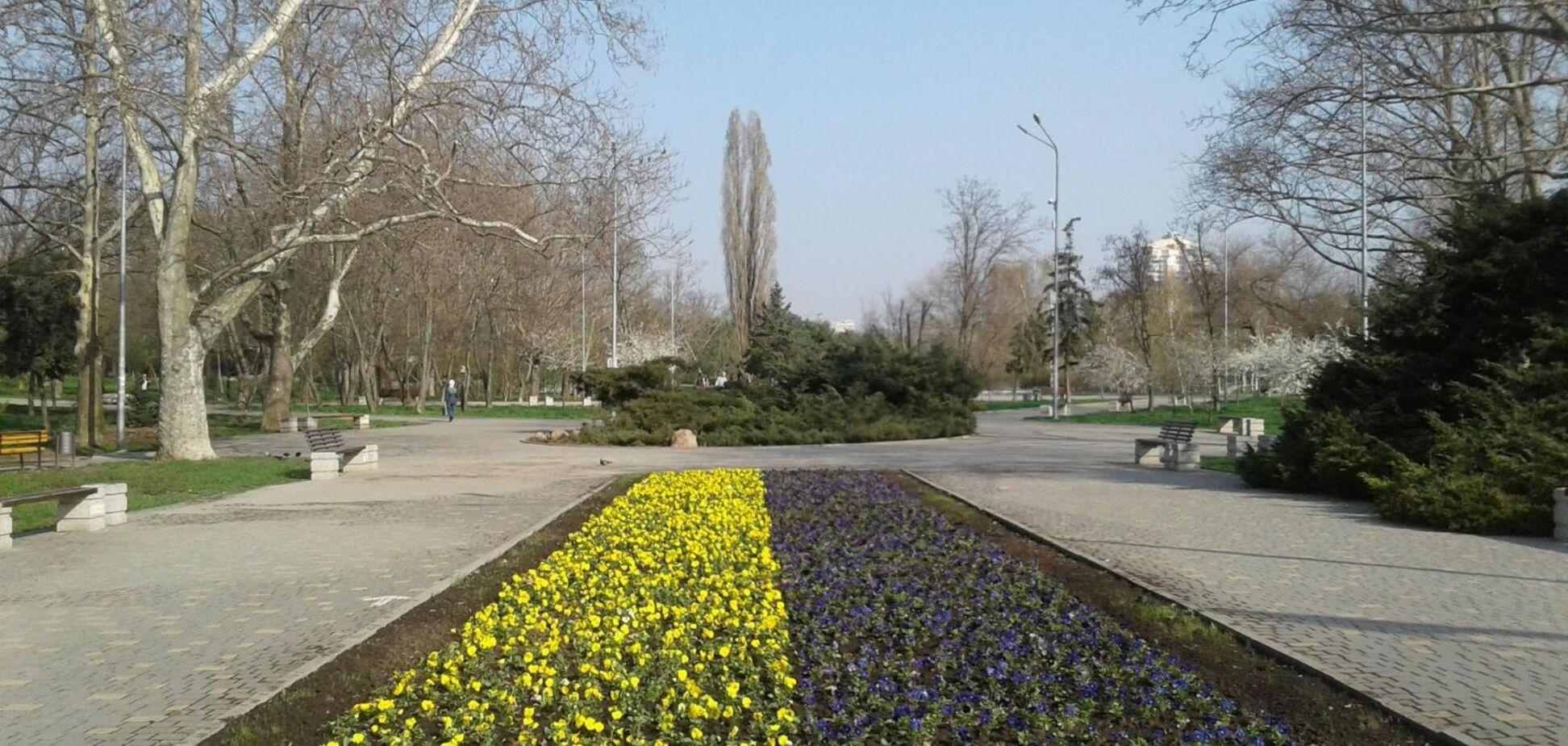 Український прапор з квітів з'явився в Одесі