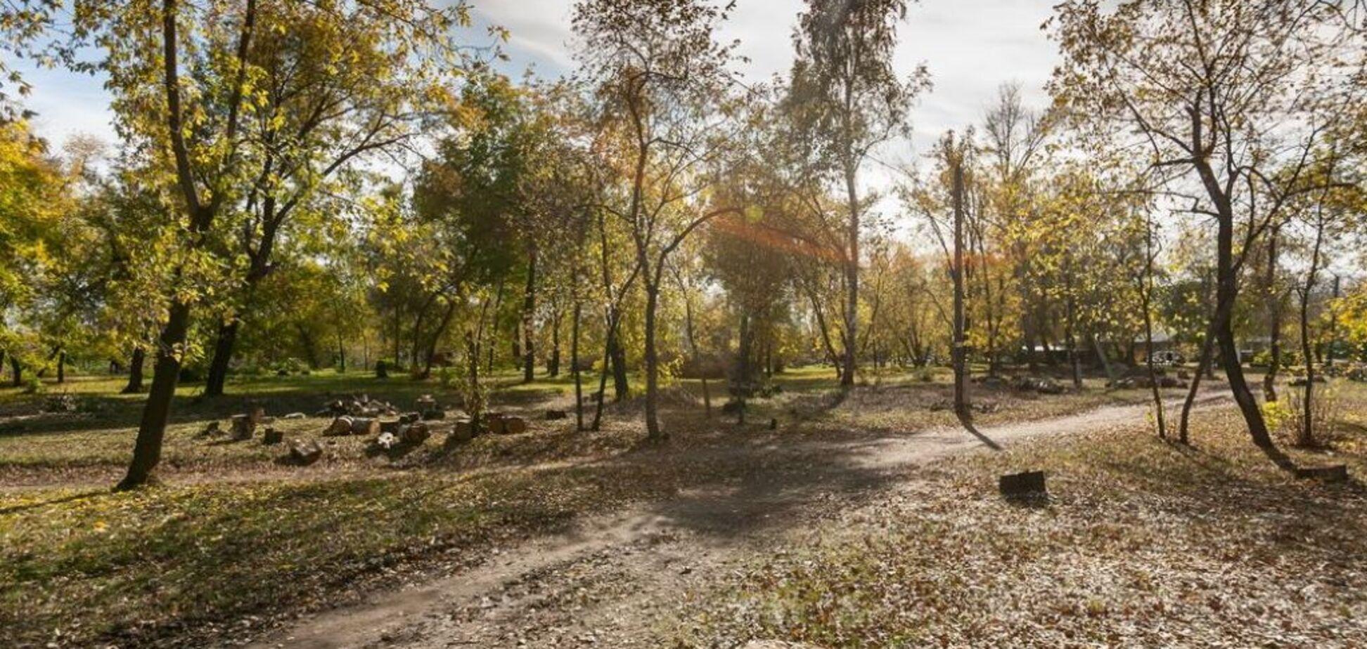 В центре Запорожья вырубят целый парк