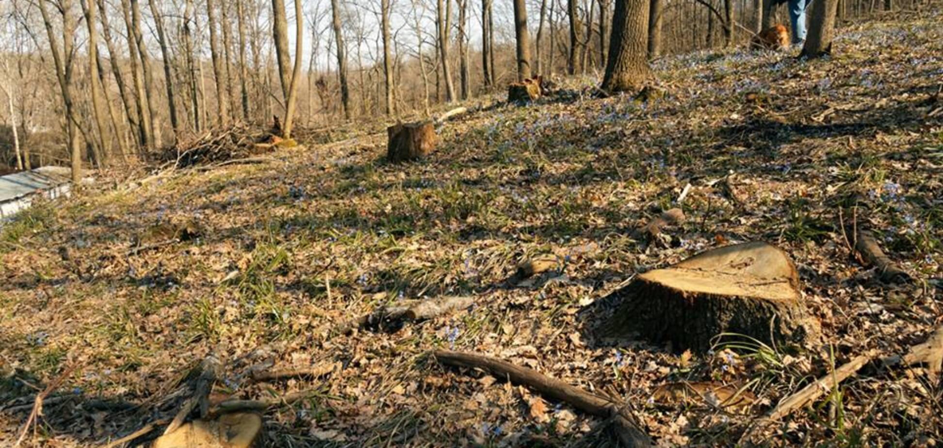 Одни пеньки: харьковчане в ужасе от варварской вырубки лесопарка
