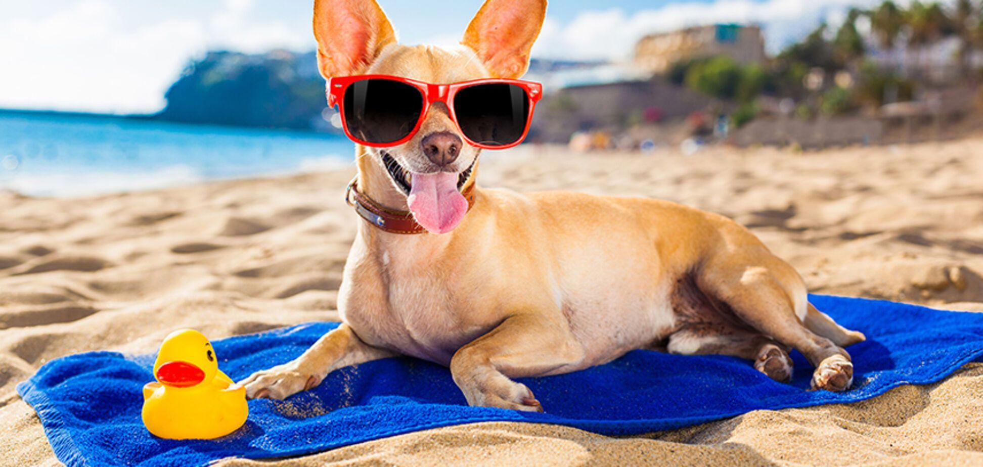 В Запорожье хотят создать собачий пляж