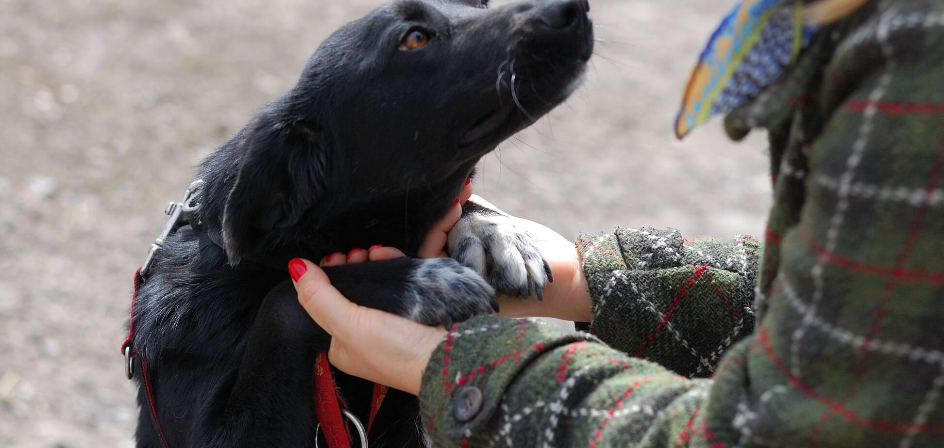 Друг недели: 5 собак Днепра, которые ищут дом