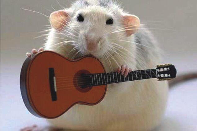 День крысы: к чему снятся эти животные