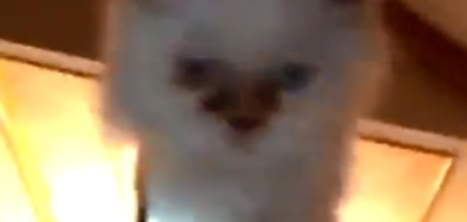 'Летающий' котенок с ноутбуком стал звездой сети: появилось видео