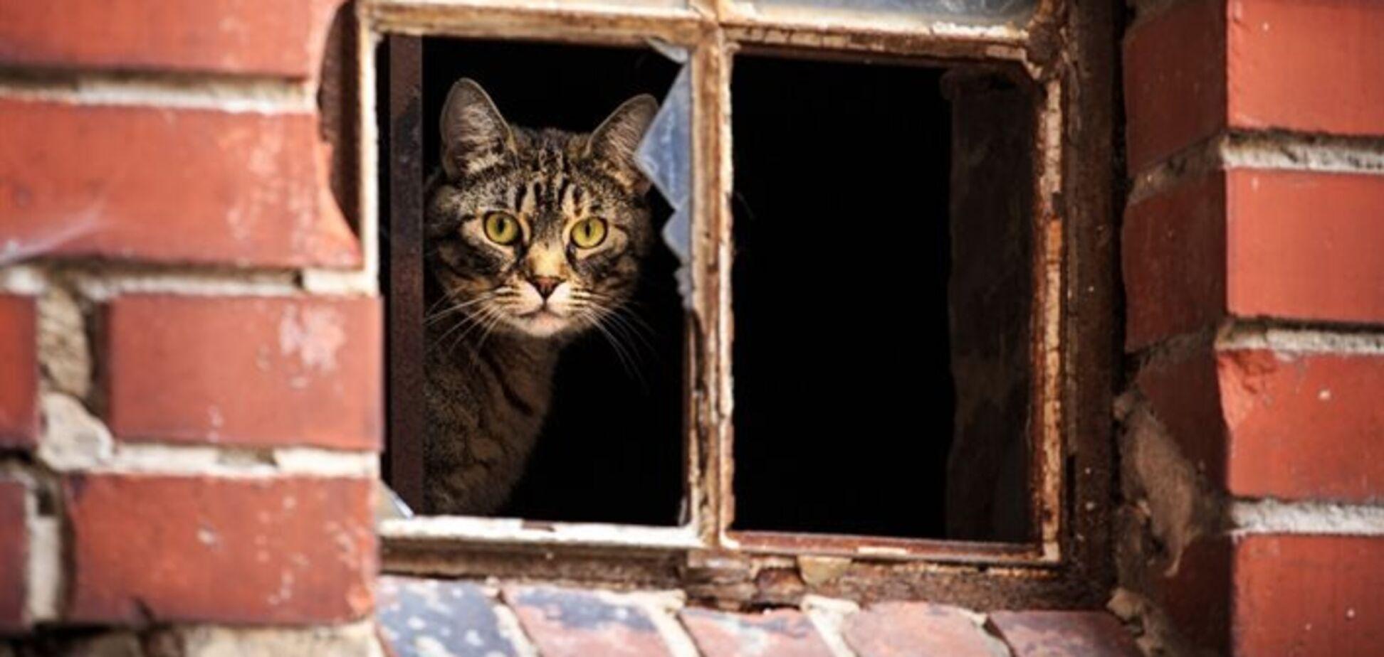 В Днепре запретили вылов бездомных котов