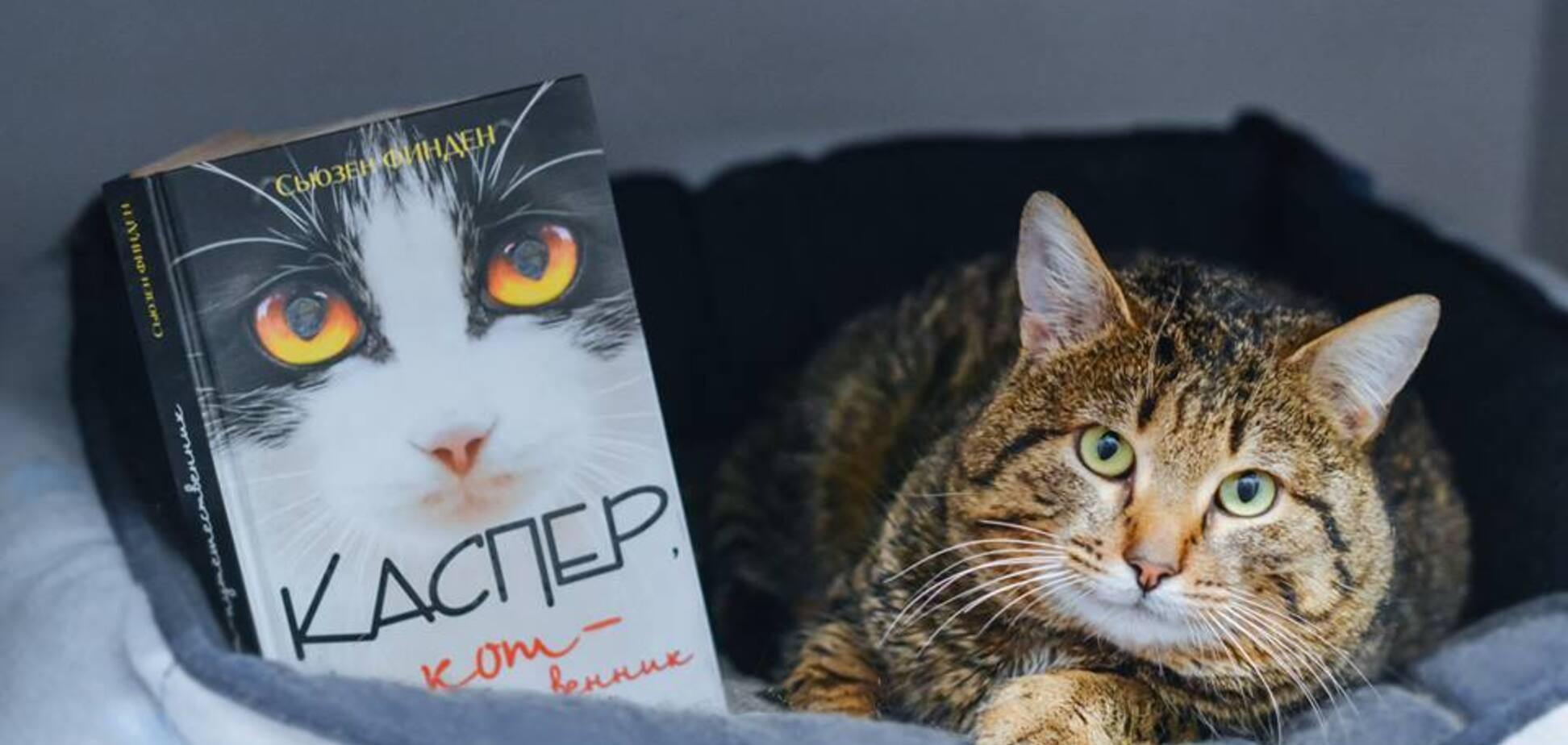 Волонтеры устроили книжный аукцион, чтобы помочь котам