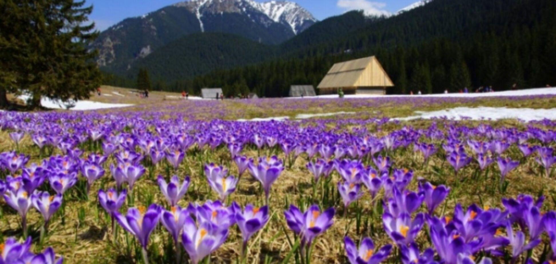 Весна в Украине