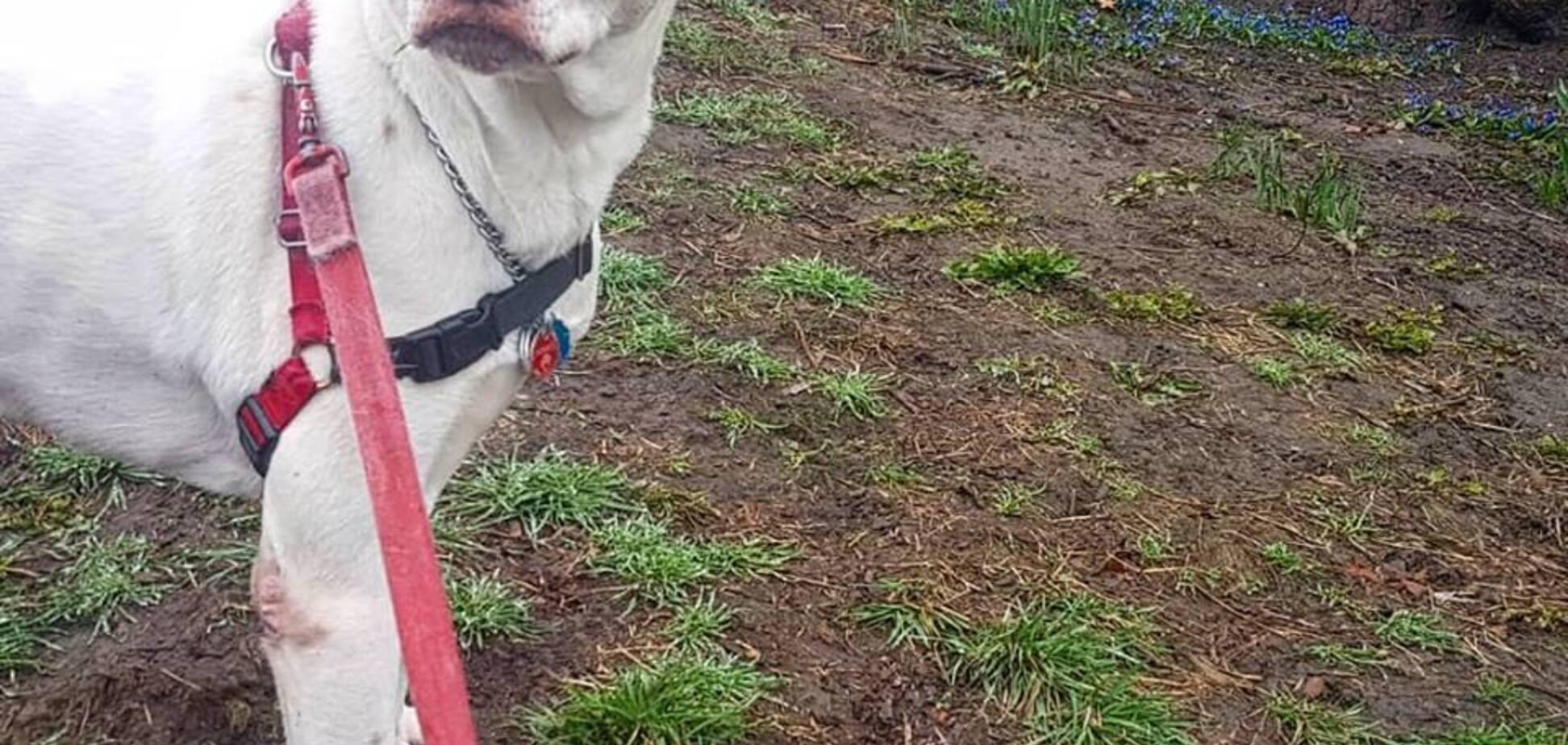 Уборка за собакой: дело не в штрафе?