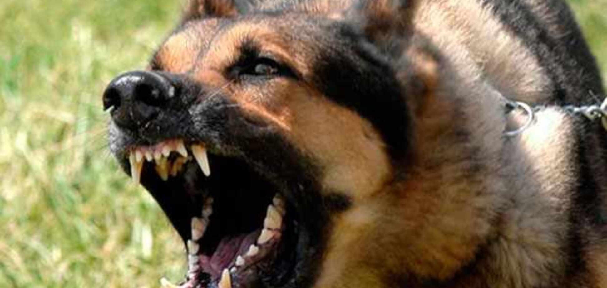 Екополіція і штрафи: в Україні готують неприємний сюрприз власникам тварин