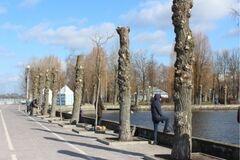 Каліцтво 'під стовп': як глибока обрізка вбиває дерева