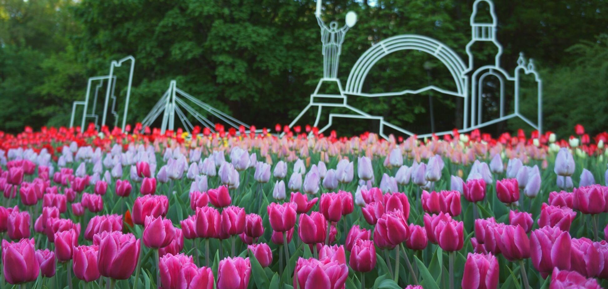 Выставка тюльпанов на Певческом поле: яркий фоторепортаж