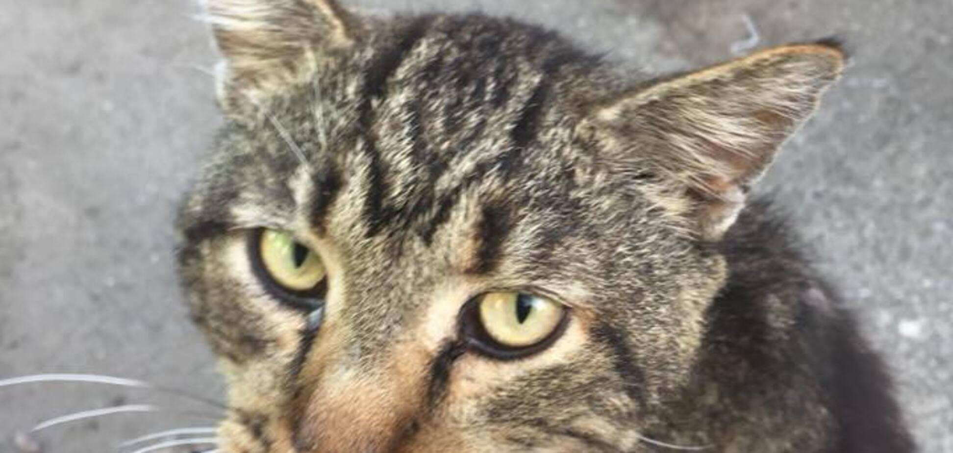 У Києві шкуродер підпалив кота: опубліковані моторошні фото