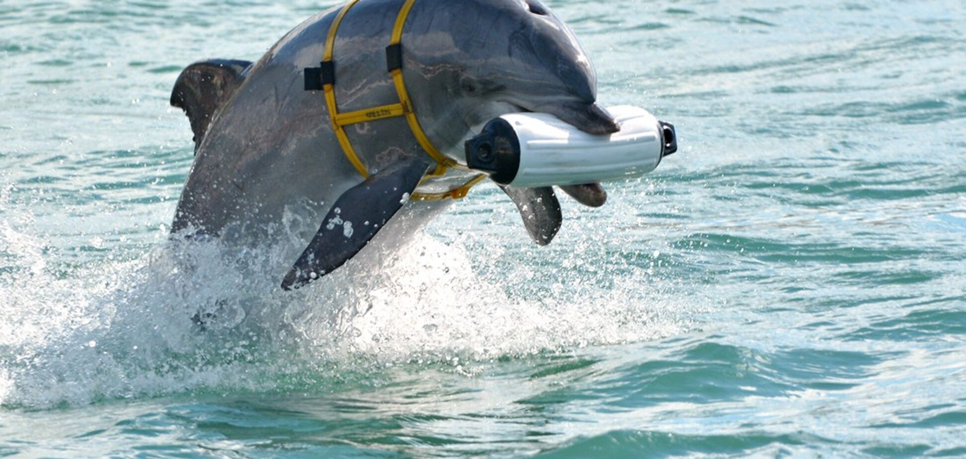 Украинские боевые дельфины погибли в Крыму – постпред Порошенко