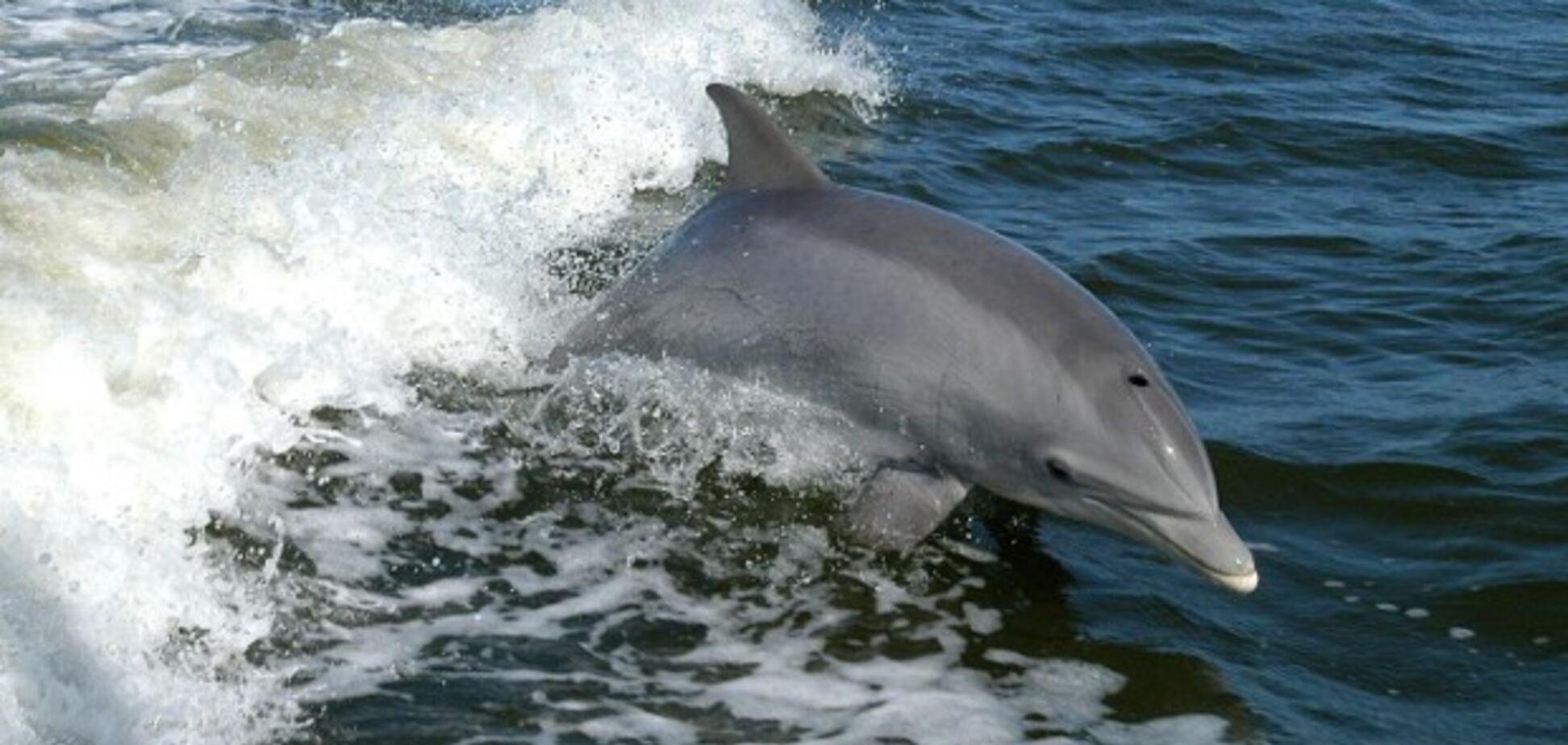 У берегов Бердянска снова заметили дельфинов: видеофакт