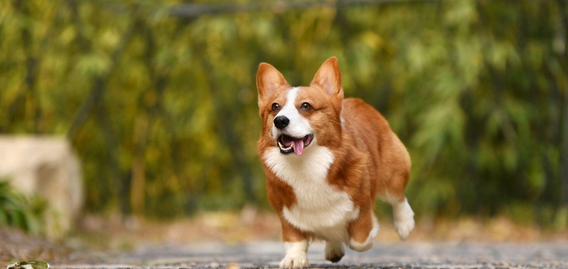 Друг недели: четыре собаки Днепра, которые ищут дом