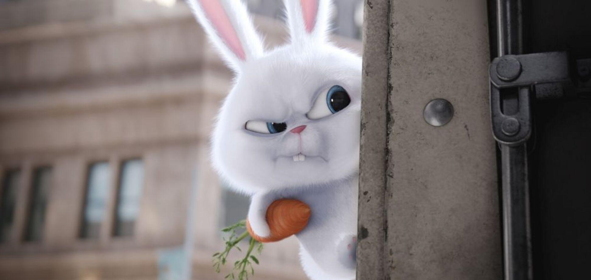 7 шкідливих міфів про кроликів
