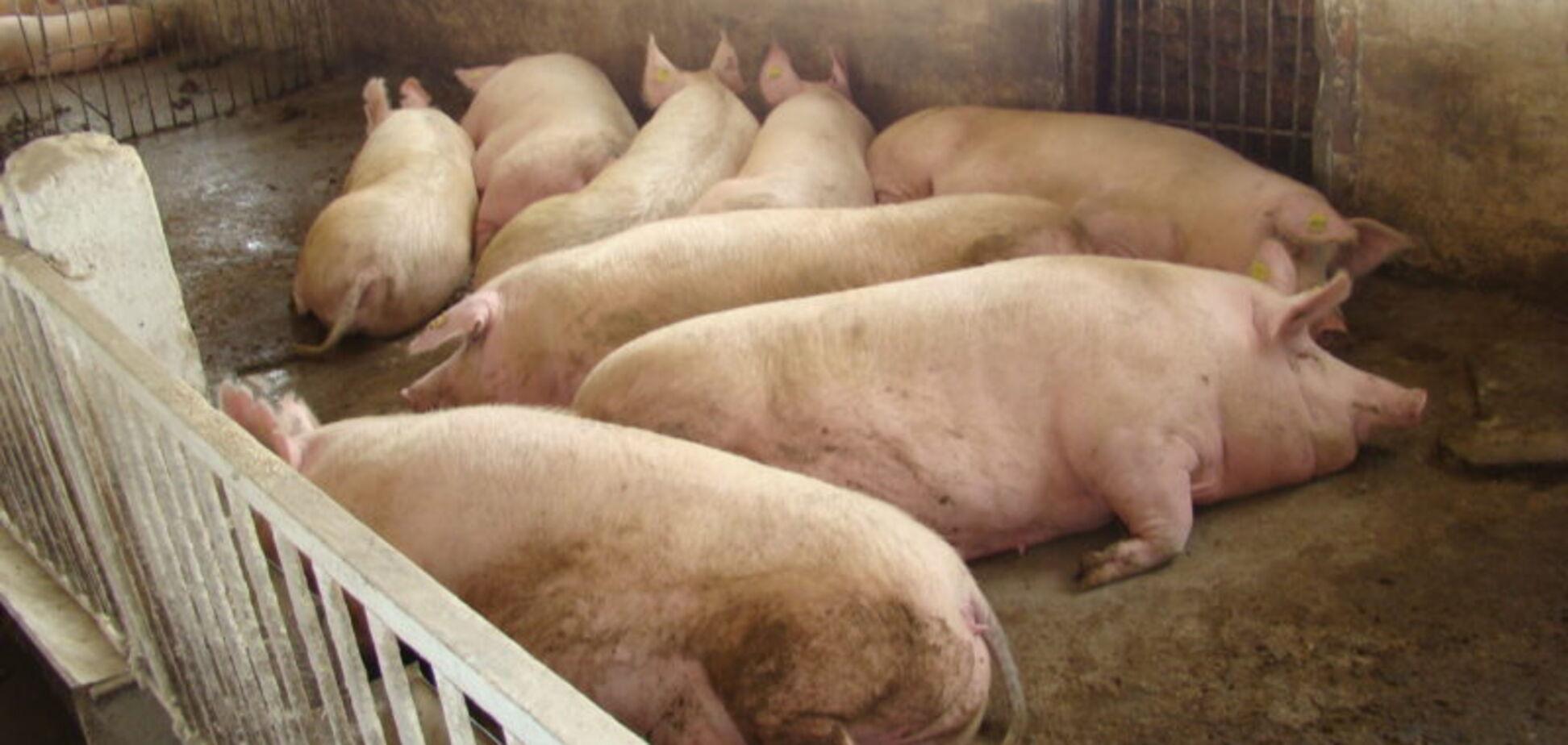 Разрушает организм: почему мясо в Украине смертельно опасно