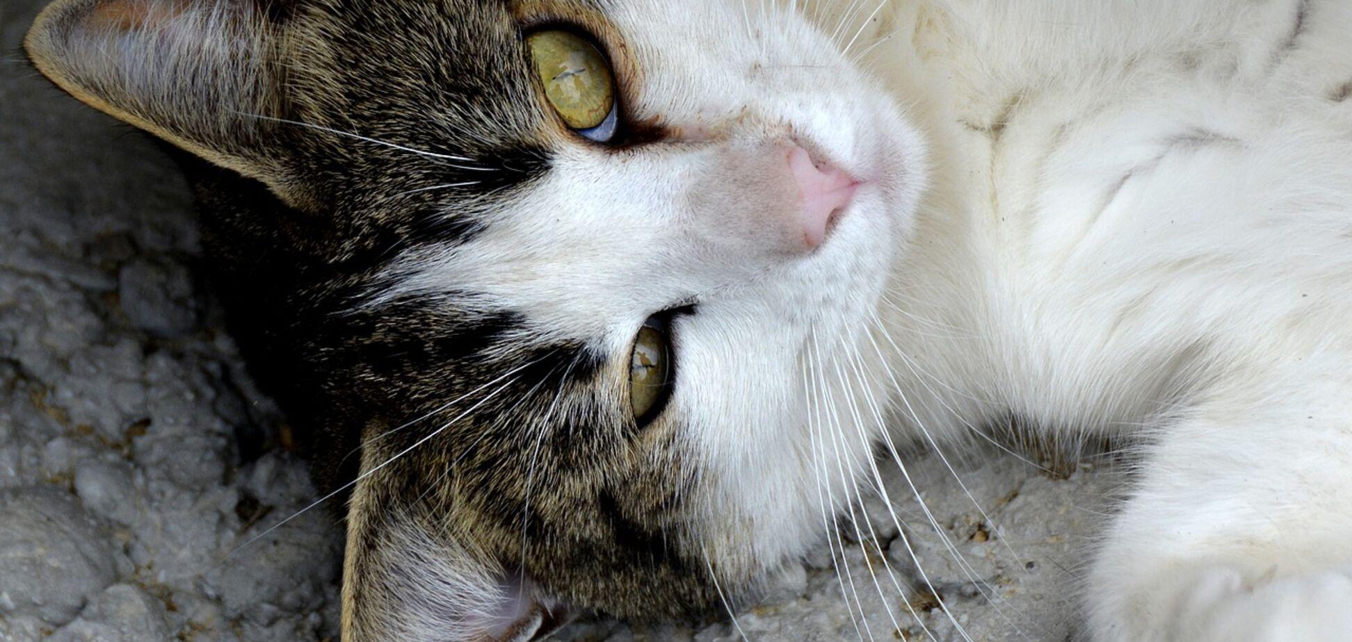 Друг тижня: чотири кота Дніпра, які шукають будинок