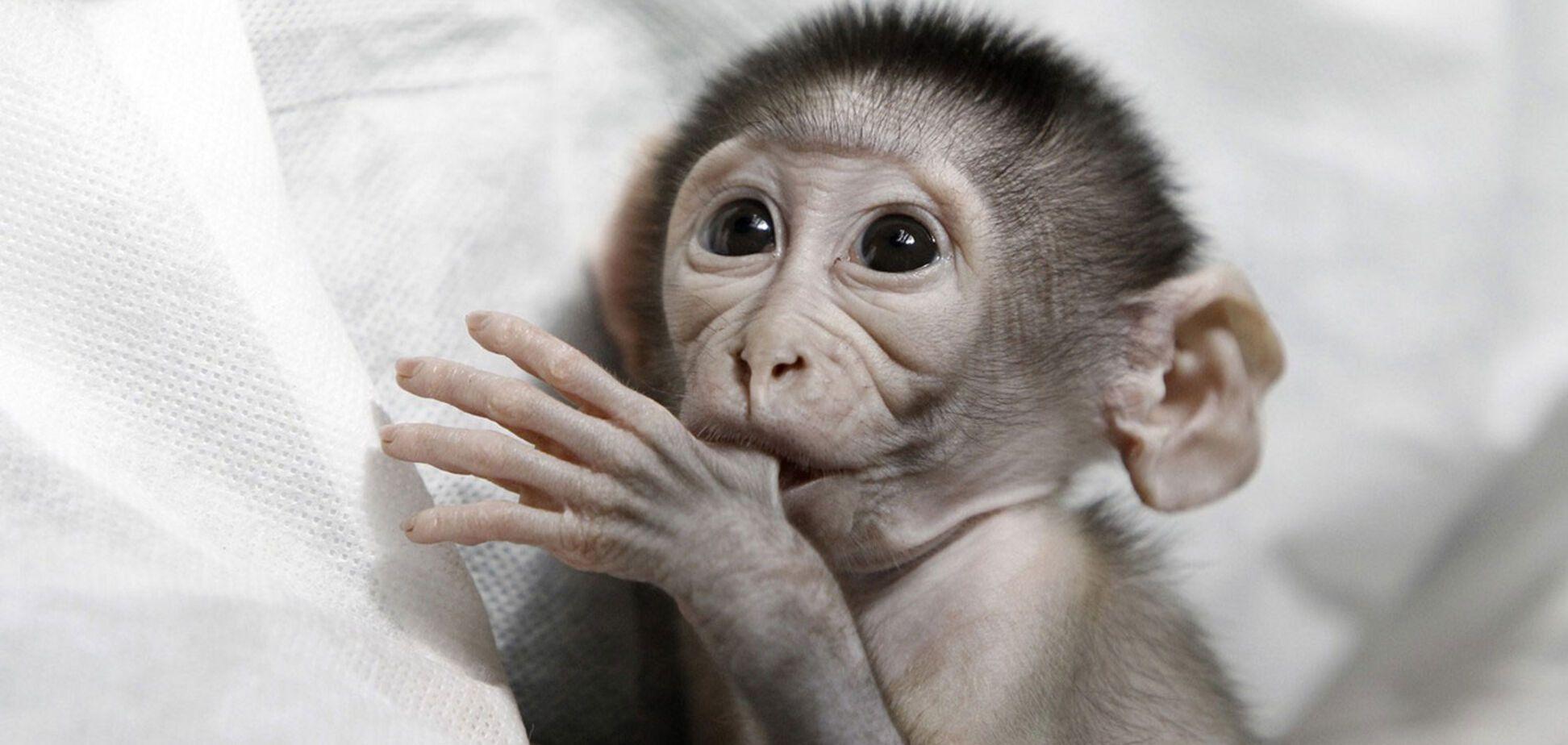 Греется и ест! Бердянский зоопарк показал подросшего капуцинчика