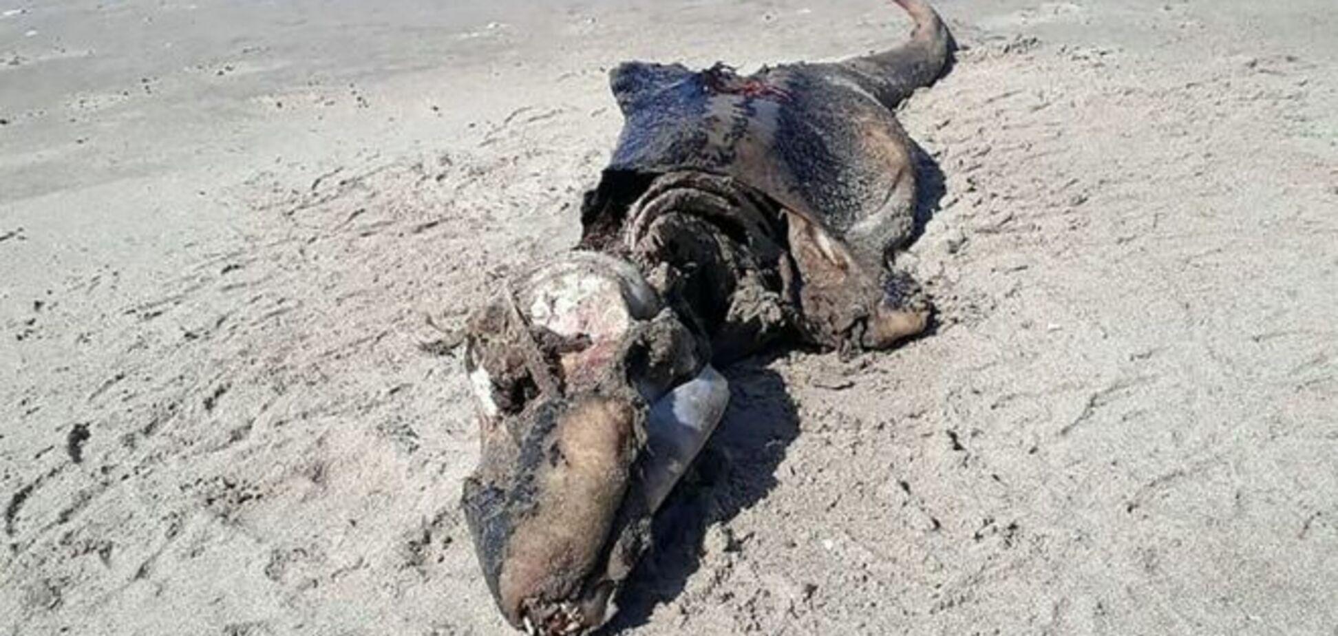 В Уельсі на пляж вимило загадкового монстра: моторошне фото