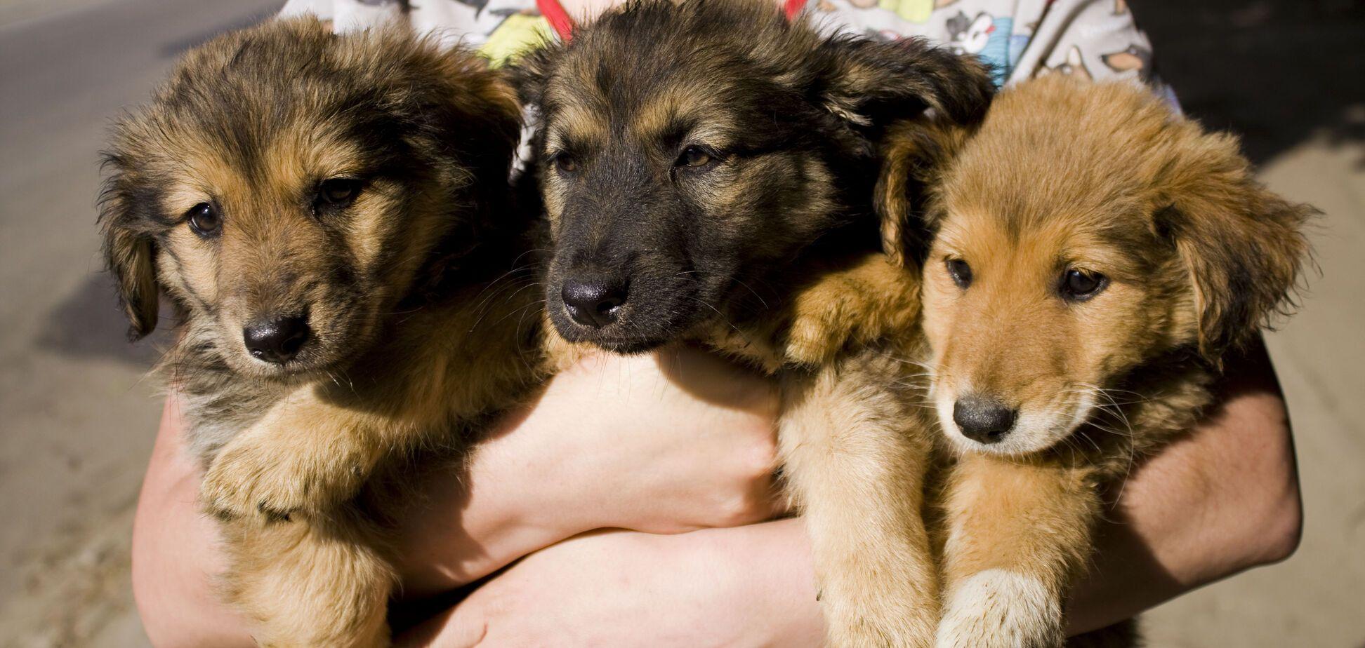 Друг тижня: чотири собаки Дніпра, які шукають дім