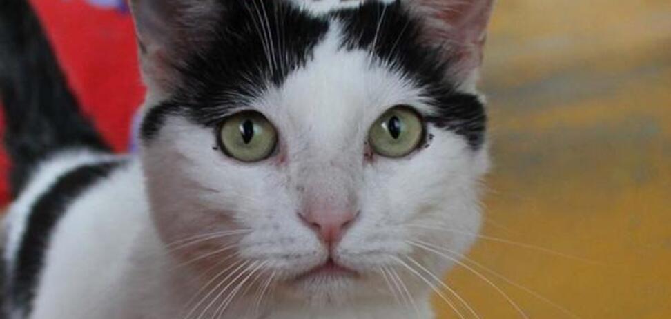 В Италии кот стал миллионером: как ему это удалось