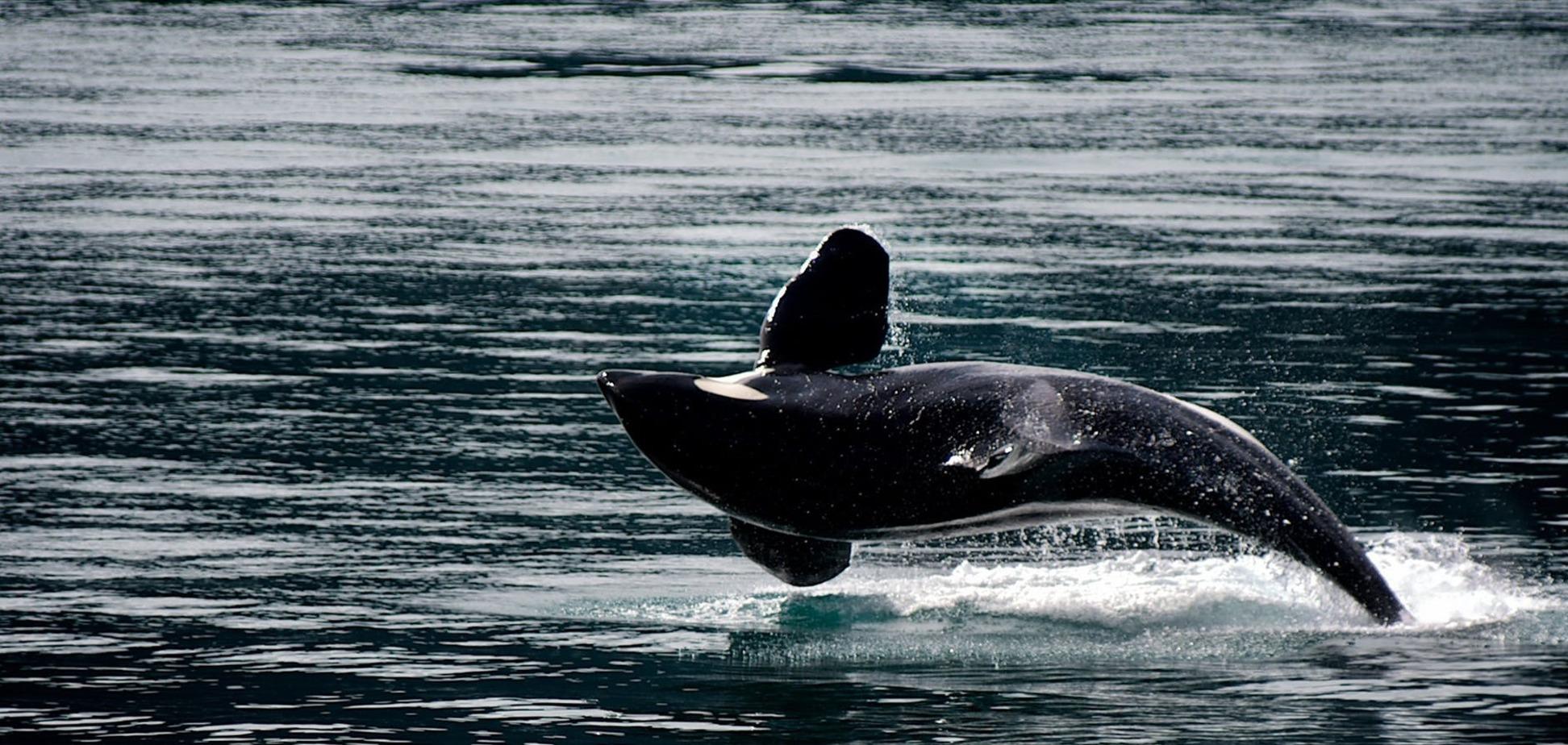 У побережья в Мариуполе заметили дельфинов