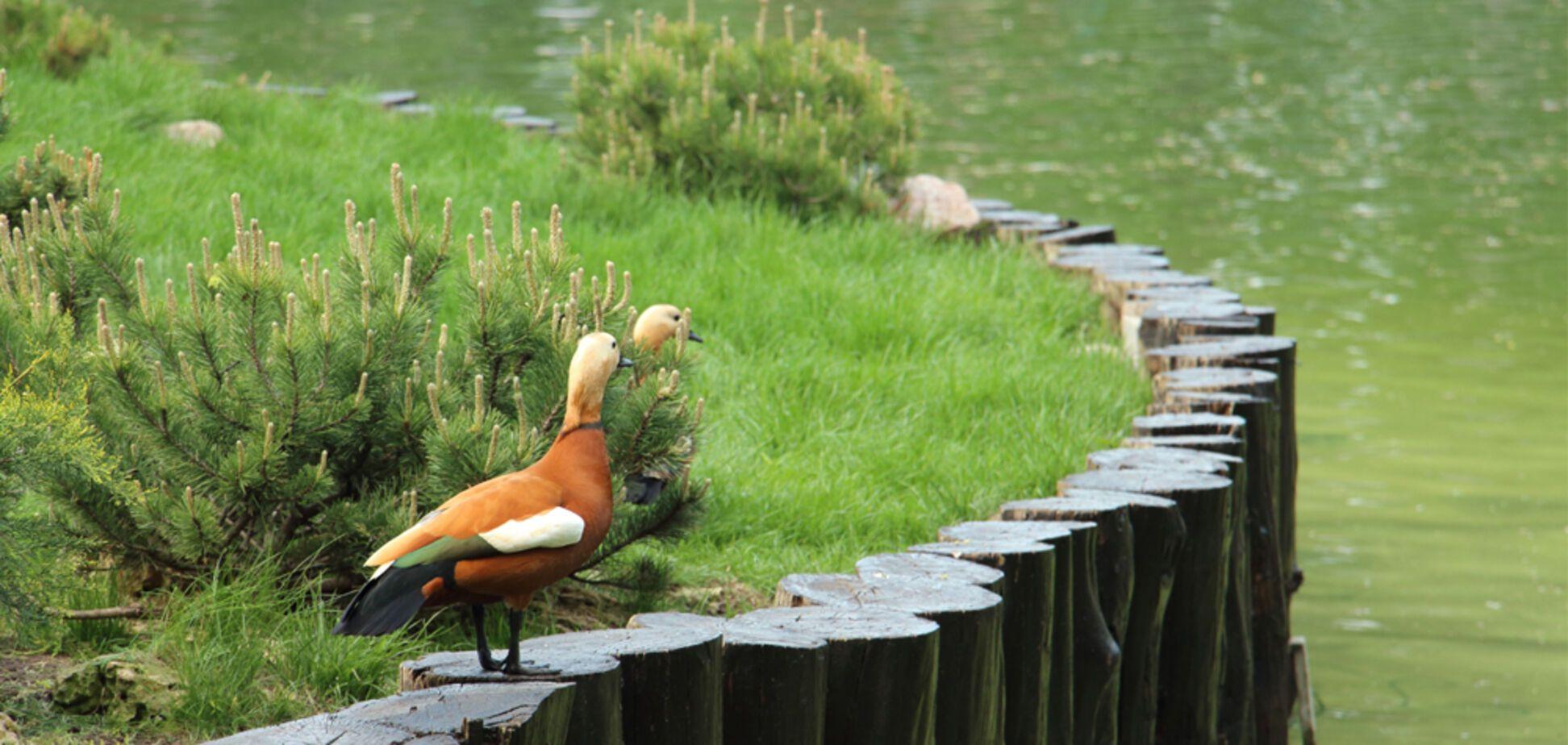Птахи з харківського зоопарку полетіли у 'відрядження'. Відеофакт