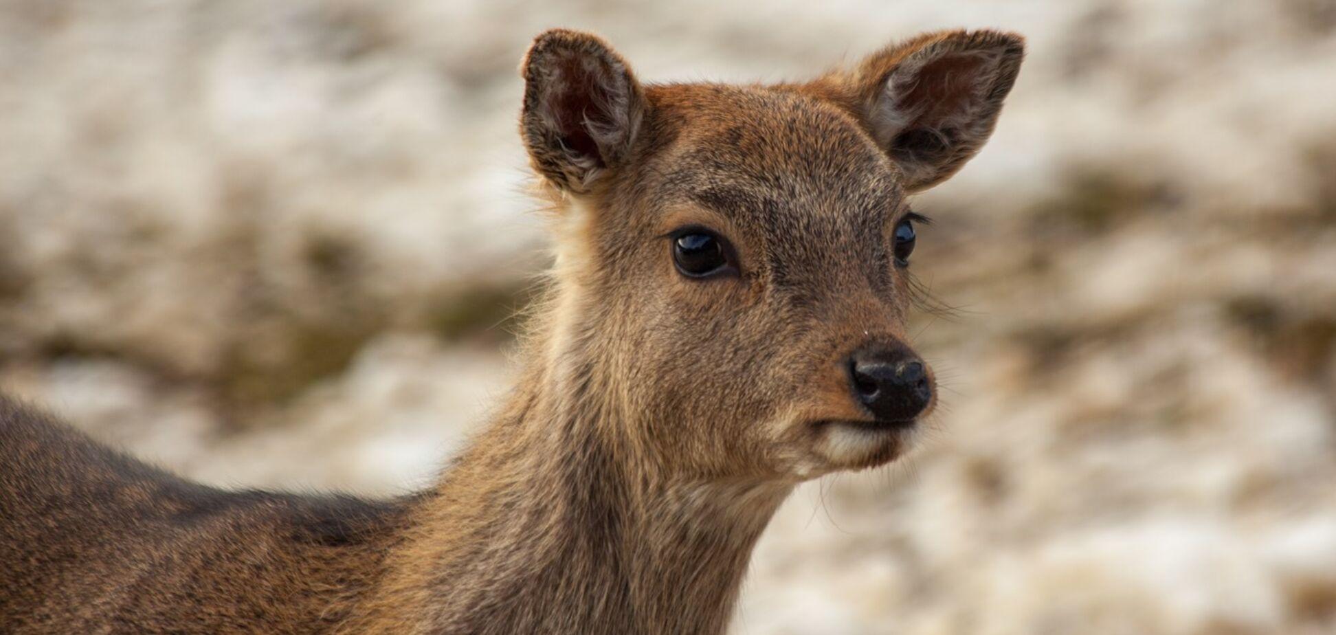 В зоопарке Межигорья похвастались пополнением: видео